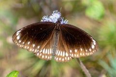 Kleurenpatronen van een vlinder stock fotografie