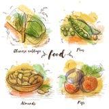 Kleurenreeks van vegetarisch voedsel in grafische schets vector illustratie