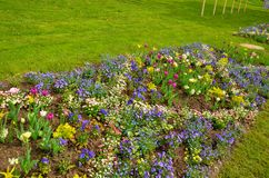 Kleurentulpen op een zonnige dag met duidelijke blauwe hemel stock fotografie
