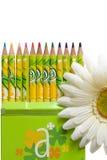 Kleurpotloden in groene doos & bloem Royalty-vrije Stock Afbeeldingen