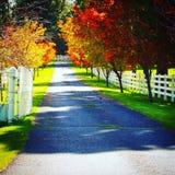kleurrijk Royalty-vrije Stock Foto's