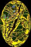 Kleurrijk, abstract ei van het polariseren van micrograaf van een mineraal Royalty-vrije Stock Fotografie