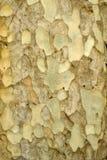 Kleurrijk abstract patroon van oude boomschors Stock Foto's