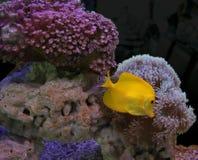 Kleurrijk aquarium royalty-vrije stock foto's