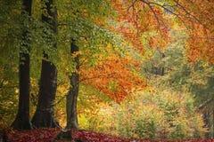 Kleurrijk Autumn Trees In Forest Royalty-vrije Stock Fotografie
