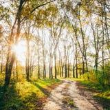 Kleurrijk Autumn Trees In Forest Royalty-vrije Stock Foto