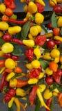 Kleurrijk beeld van droge kruiden in markt Stock Afbeelding