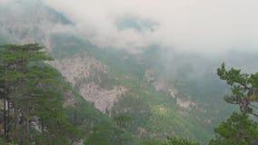Kleurrijk berglandschap met groene die pijnbomen met mist of nevel, satellietbeeld worden behandeld stock footage