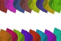 Kleurrijk Blad Stock Afbeelding