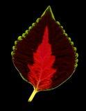 Kleurrijk blad op zwarte Royalty-vrije Stock Afbeelding