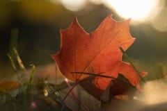 Kleurrijk blad tegen de zon stock afbeeldingen