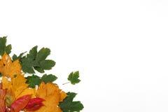 Kleurrijk bladerenframe Stock Foto