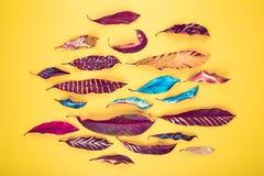 Kleurrijk bladerenpatroon royalty-vrije stock foto's