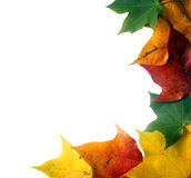Kleurrijk bladframe stock foto's