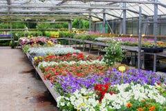 Kleurrijk bloeiend de tuincentrum van de zomerinstallaties, Nederland Royalty-vrije Stock Foto's