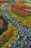 Kleurrijk bloembed Royalty-vrije Stock Fotografie