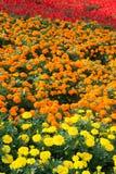 Kleurrijk bloembed Royalty-vrije Stock Foto's