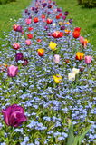 Kleurrijk bloembed in park Stock Afbeelding