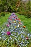 Kleurrijk bloembed in park Stock Fotografie