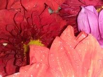 Kleurrijk bloemblaadje stock foto