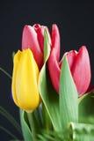 Kleurrijk bloemboeket Stock Afbeelding