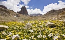 Kleurrijk bloemen en gras met grote rots in de bergen van Turkije Royalty-vrije Stock Afbeeldingen