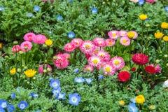 Kleurrijk bloemen groen park in Tokyo Japan op 31 Maart, 2017 | Mooie aardachtergrond Stock Afbeeldingen