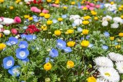 Kleurrijk bloemen groen park in Tokyo Japan op 31 Maart, 2017 | Mooie aardachtergrond Royalty-vrije Stock Foto