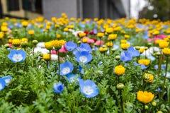 Kleurrijk bloemen groen park in Tokyo Japan op 31 Maart, 2017 | Mooie aardachtergrond Royalty-vrije Stock Afbeeldingen