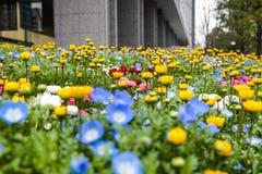 Kleurrijk bloemen groen park in Tokyo Japan op 31 Maart, 2017 | Mooie aardachtergrond Stock Afbeelding