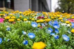 Kleurrijk bloemen groen park in Tokyo Japan op 31 Maart, 2017 | Mooie aardachtergrond Royalty-vrije Stock Foto's