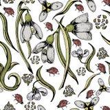 Kleurrijk bloemen naadloos sneeuwklokjespatroon Getrokken de hand bloeit achtergrond stock illustratie