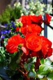 Kleurrijk bloemenhoogtepunt van zonneschijn in zomer Stock Foto's