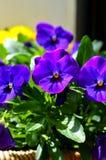 Kleurrijk bloemenhoogtepunt van zonneschijn in zomer Royalty-vrije Stock Afbeeldingen
