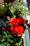 Kleurrijk bloemenhoogtepunt van zonneschijn in zomer Royalty-vrije Stock Fotografie