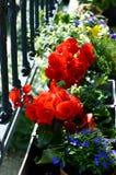 Kleurrijk bloemenhoogtepunt van zonneschijn in zomer Stock Afbeelding