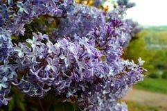 Kleurrijk bloemenhoogtepunt van zonneschijn in zomer Royalty-vrije Stock Afbeelding