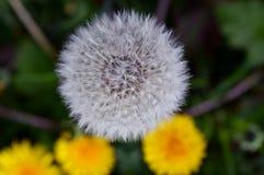 Kleurrijk bloemenhoogtepunt van zonneschijn in zomer Royalty-vrije Stock Foto's