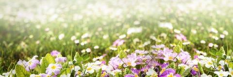Kleurrijk bloempanorama Stock Foto's