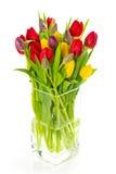 Kleurrijk boeket van de verse bloemen van de de lentetulp Stock Afbeeldingen