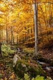 Kleurrijk bos Stock Afbeeldingen