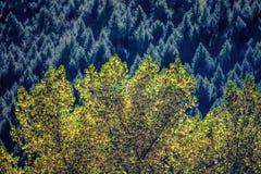 Kleurrijk bos Stock Foto's
