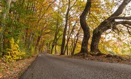 Kleurrijk bos bij de herfst Royalty-vrije Stock Foto