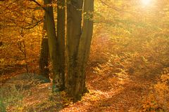 Kleurrijk bos bij de herfst royalty-vrije stock afbeelding