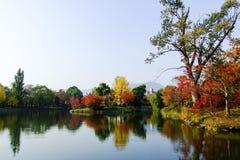 Kleurrijk bos bij de oever van het meer in de herfst Stock Foto