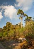 Kleurrijk bos in de herfst op een zonnige dag Royalty-vrije Stock Foto