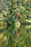 Kleurrijk bos die op een vijver weerspiegelen Stock Afbeeldingen