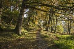 Kleurrijk bos het landschapsbeeld van Autumn Fall in platteland aroun Stock Foto's