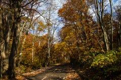 Kleurrijk bos met het vallen feaves in de herfst stock afbeeldingen