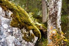 Kleurrijk bos met zonnestralen Stock Afbeelding
